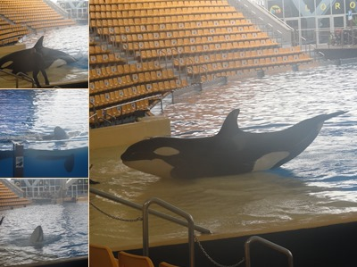 View The Orca Show