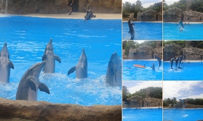 View The Dolphin Show